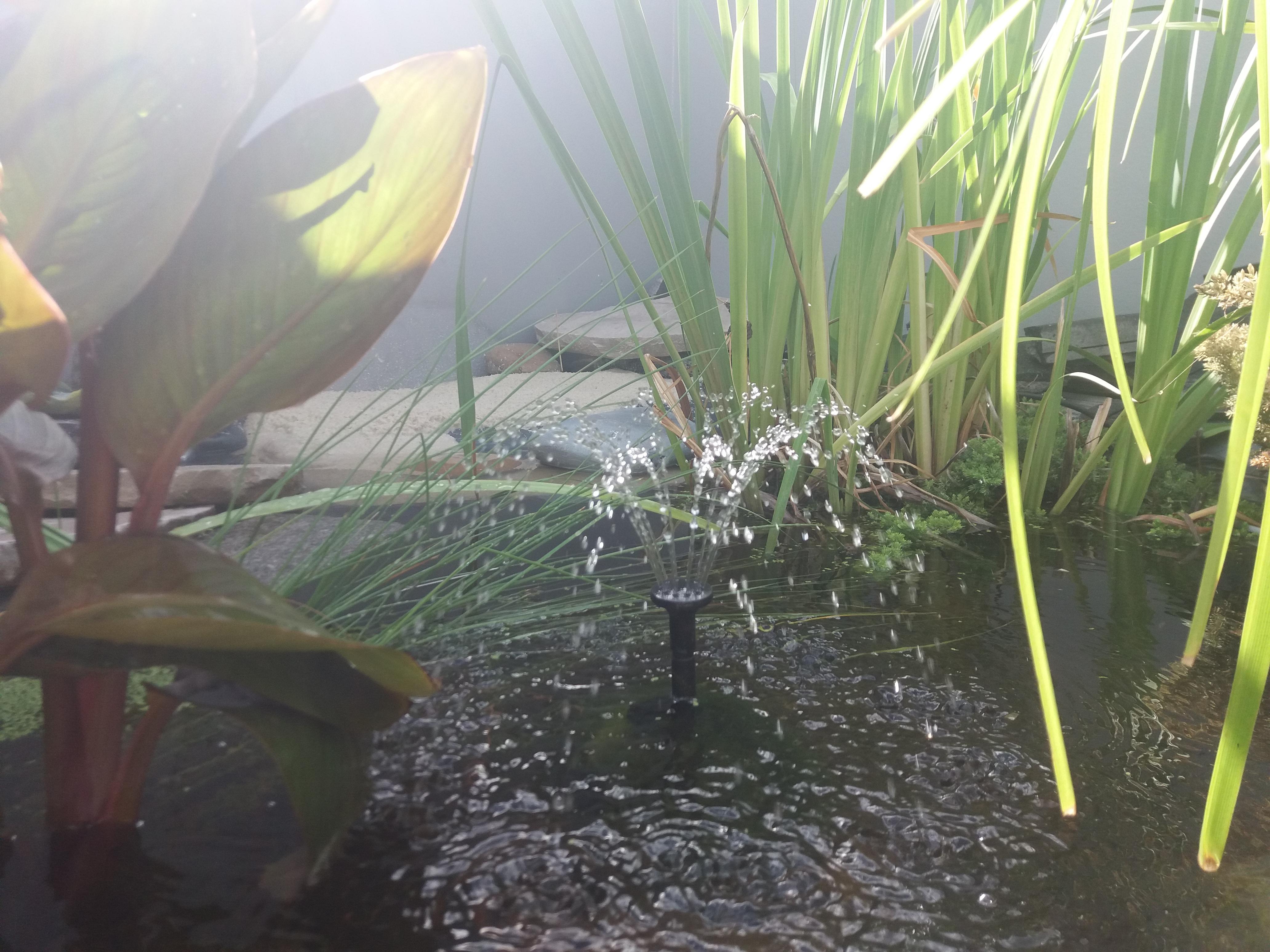 Solarpumpe für den Teich | eine gute Idee?