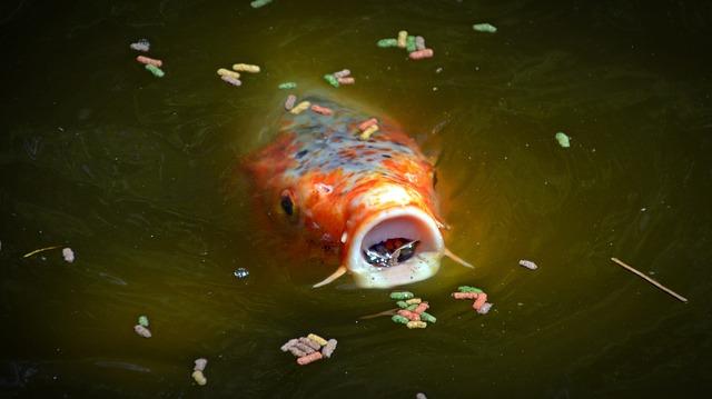 Teichfischfutter