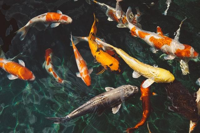 Sauerstoffpumpe Teich